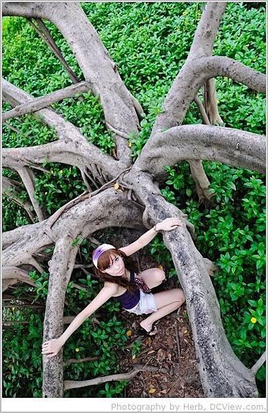 樹的枝幹_01.jpg