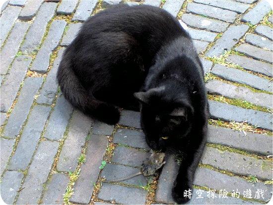 Domkerk前的貓捉老鼠