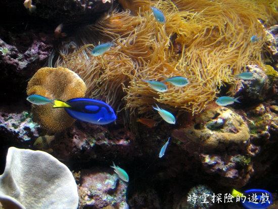 國立海洋生物博物館:熱帶魚