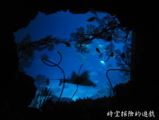 國立海洋生物博物館:魟魚剪影