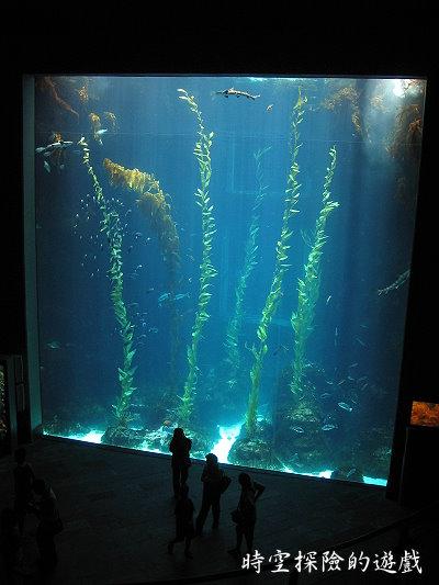 國立海洋生物博物館:巨大的魚缸