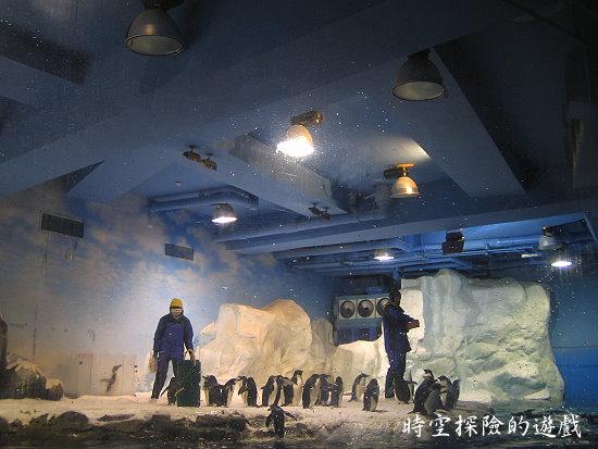 國立海洋生物博物館:可愛的企鵝