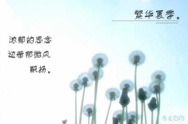 蒲公英的季节_副本.jpg