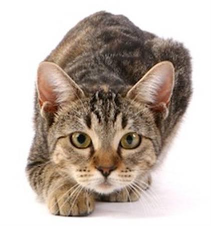 cat-stalking-crop
