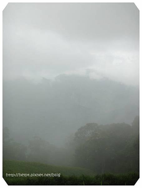赤柯山的無緣金針花海5.jpg