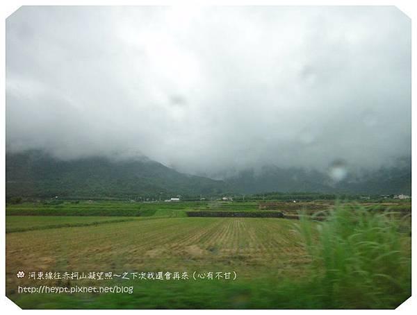 赤柯山的無緣金針花海22.jpg