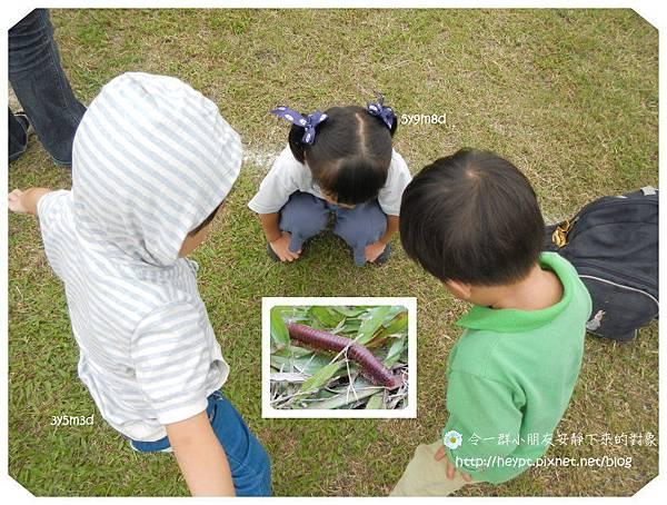 蕾蕾幼稚園運動會13.jpg