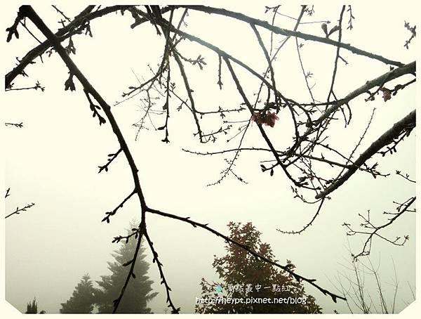 西寶國小8.jpg