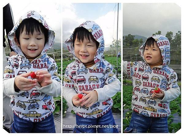採草莓5.jpg