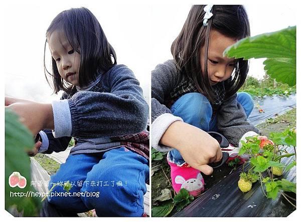 採草莓8.jpg