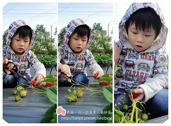 採草莓9.jpg