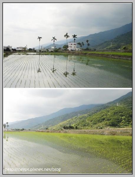 關山12.jpg