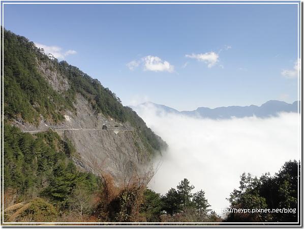 中橫觀霧15.jpg