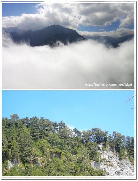 中橫觀霧12.jpg