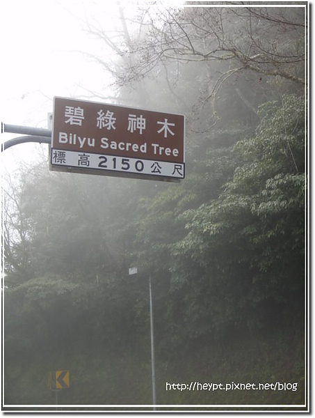 中橫觀霧5.jpg