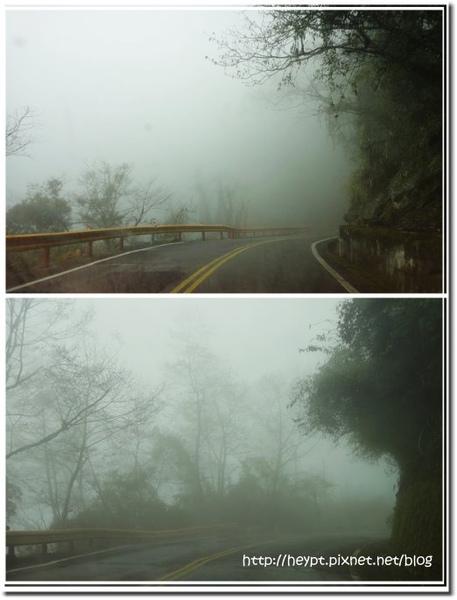 中橫觀霧3.jpg