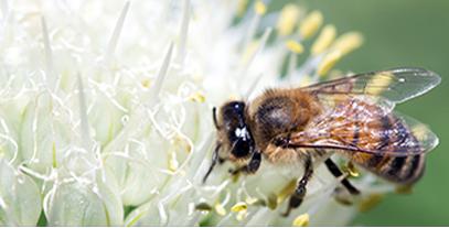 蜂蜜真假1