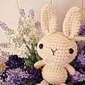 初階-兔寶貝