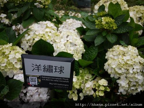 20110204 花博