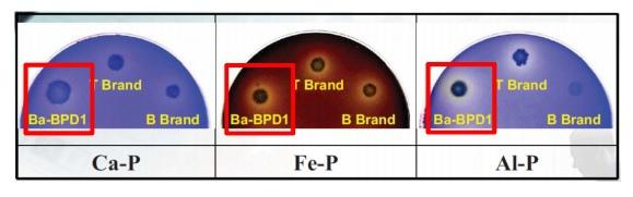 磷寶溶磷效果.jpg