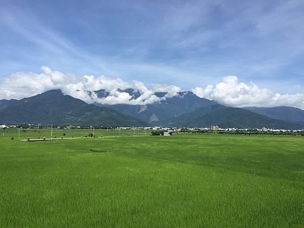 池上水稻田一景