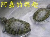烏龜.bmp
