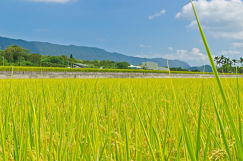 嘉明湖-797