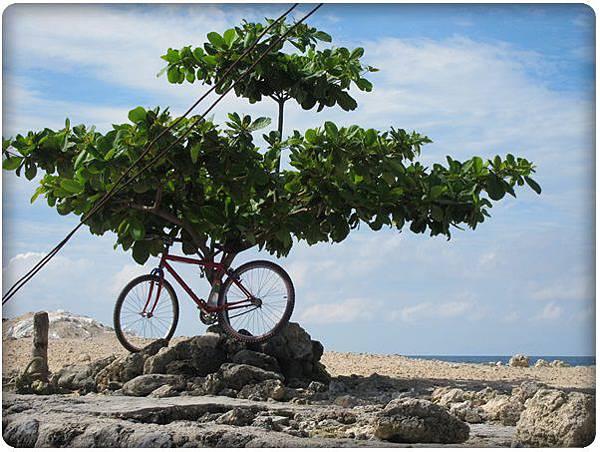 0602-15-港口旁的樹與腳踏車.jpg