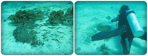 0604-58-一堆魚.jpg