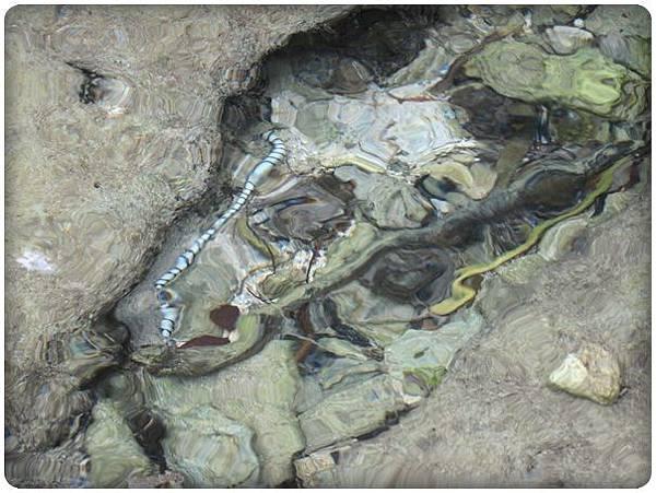 0609-87-水蛇.jpg