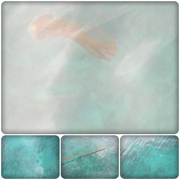 0610-6-超大的水母.jpg