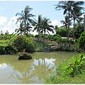 room-33-前面的小池塘.jpg