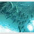 0826-15-頭上方的魚.jpg