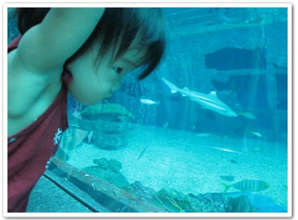 0826-20-小綠豆看魚的角度.jpg