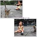 0906-12-一直來找綠豆的小貓.jpg