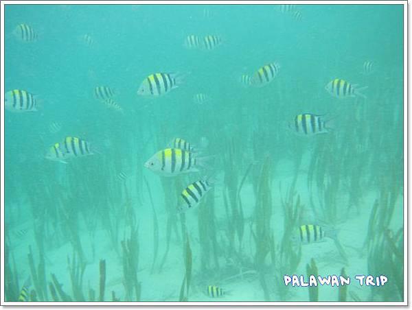 1104-21-水底下的魚.jpg