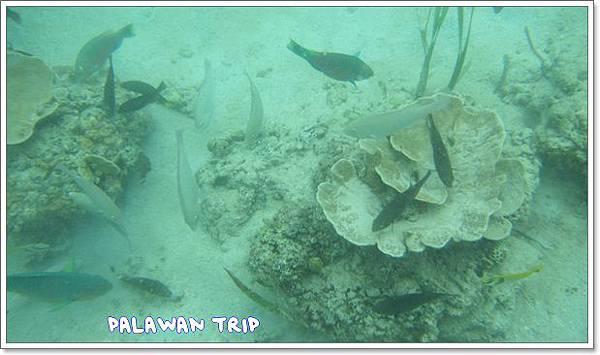 1104-21-水底下的魚2.jpg