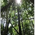 0110-28-MONKEY FOREST.jpg