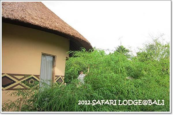 SAFARI-7-隔壁房正在努力丟紅蘿蔔給犀牛.jpg