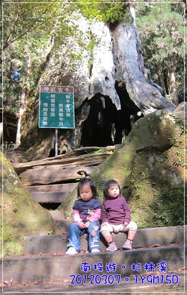 20120307-87-千古紅檜