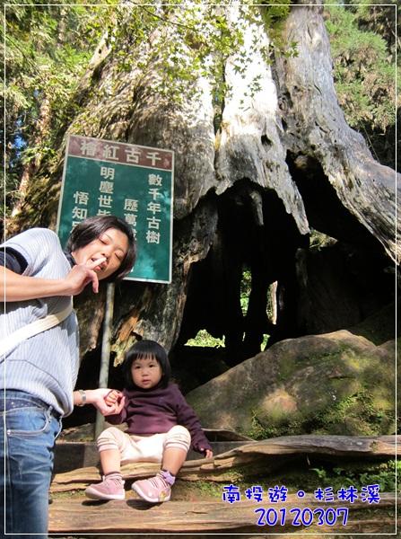 20120307-92-千古紅檜