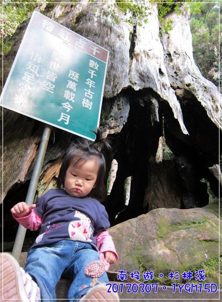 20120307-93-千古紅檜