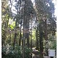 20120308-12-溪頭森林遊樂區