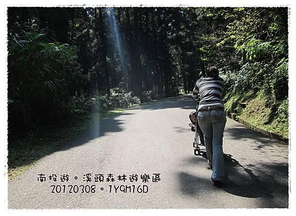 20120308-13-溪頭森林遊樂區