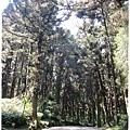 20120308-16-溪頭森林遊樂區