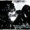 20120308-22-溪頭森林遊樂區-空中走廊