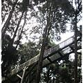 20120308-23-溪頭森林遊樂區-空中走廊