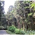 20120308-26-溪頭森林遊樂區-空中走廊