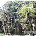 20120308-27-溪頭森林遊樂區-空中走廊