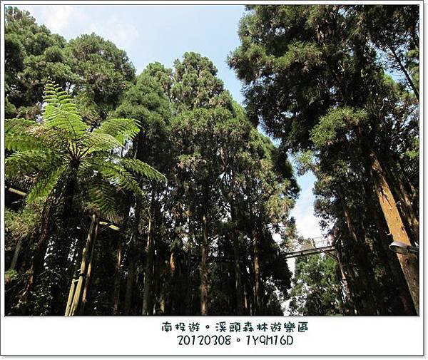 20120308-28-溪頭森林遊樂區-空中走廊